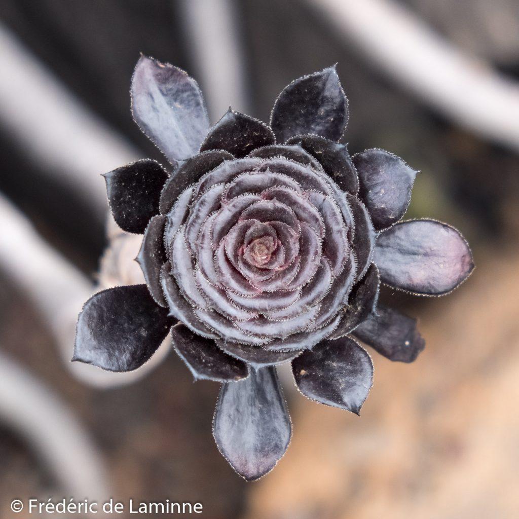 Au Jardin de Cactus toutes les plantes ne sont pas vertes ...