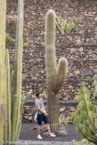 Tous les cactus ne sont pas minuscules ...