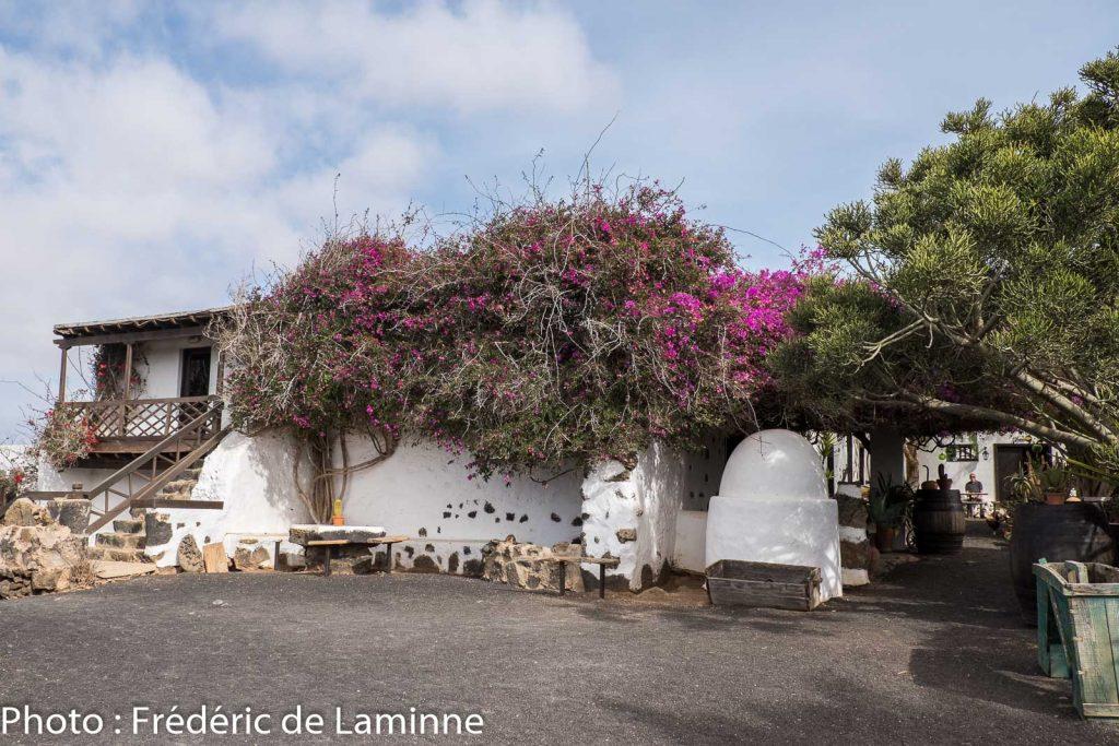 Musée Agricole El Patio (Tiagua) sur l'île de Lanzarote, Canaries le 13/11/2019. Photo : Frédéric de Laminne