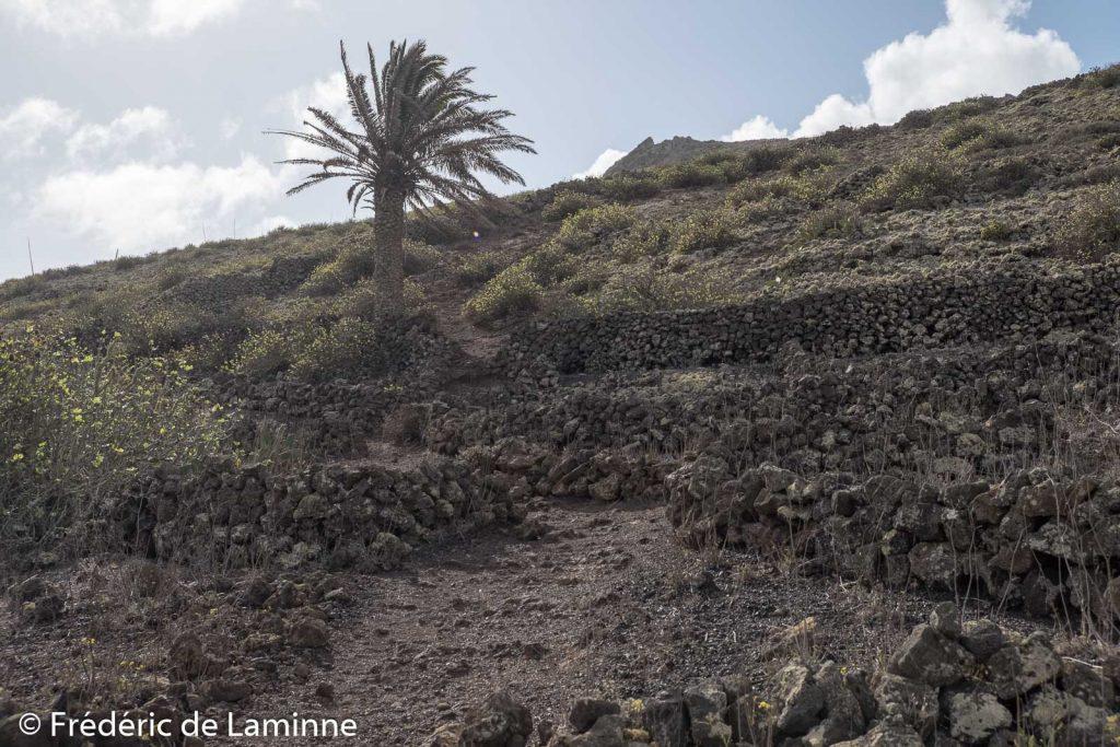 Le palmier solitaire le long du chemin vers le cratère de la Corona