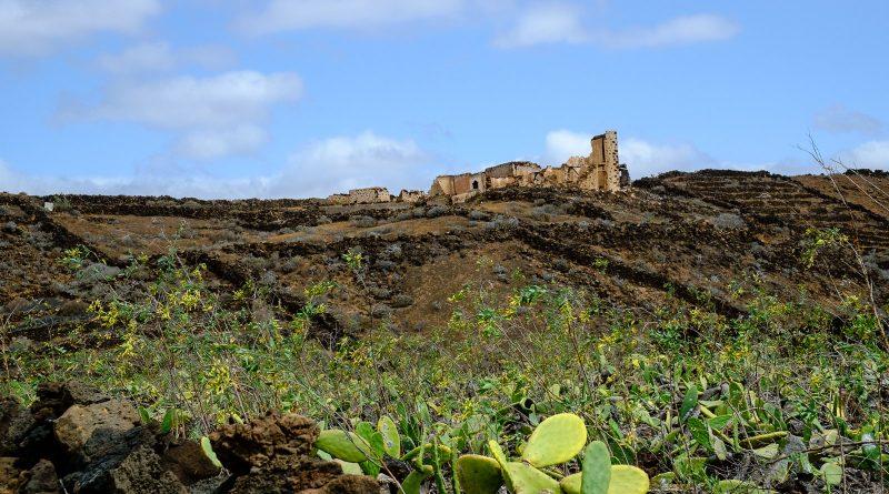 Champ de cactus près de Mala, Lanzarote