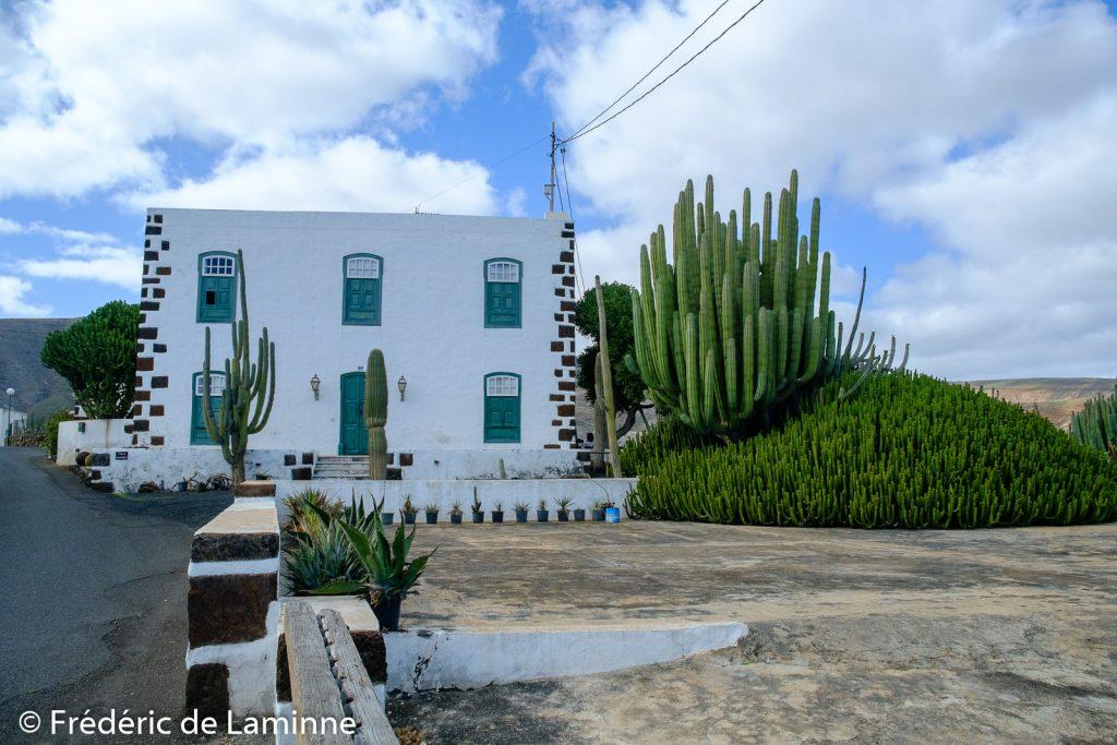 Promenade sur le thème des cactus et de la Cochenille au départ de Mala, Lanzarote