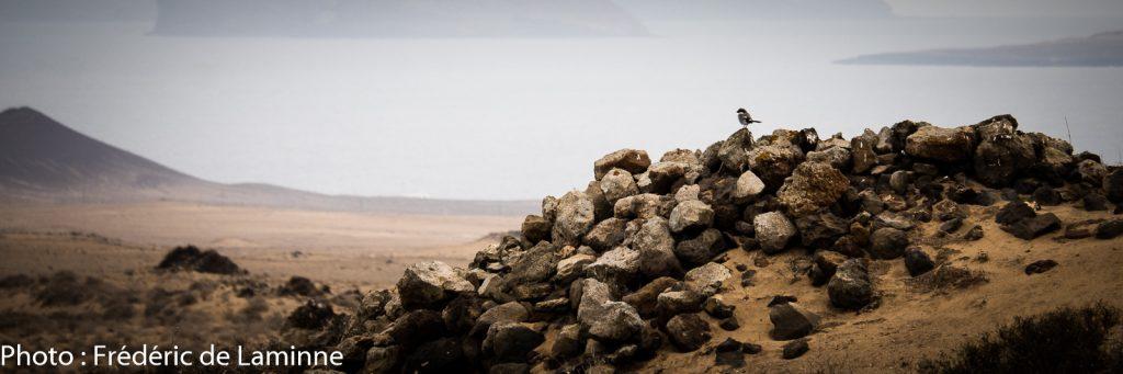 Activité de sensibilisation avec Desert Watch Lanzarote à El Jabble desert (Soo) sur l'île de Lanzarote, Canaries le 12/09/2020. Photo : Frédéric de Laminne