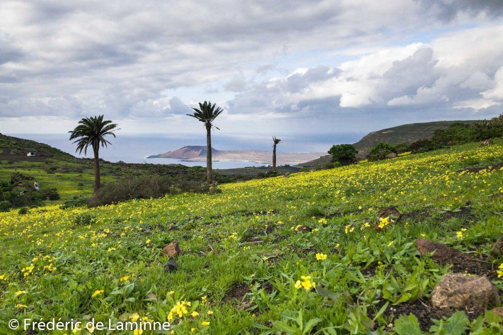 Champ de fleurs près de Guinate dans le nord de Lanzarote