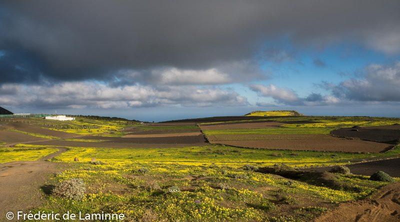Le plateau près de la station météo sur les hauteurs de Maguez est couvert de fleurs
