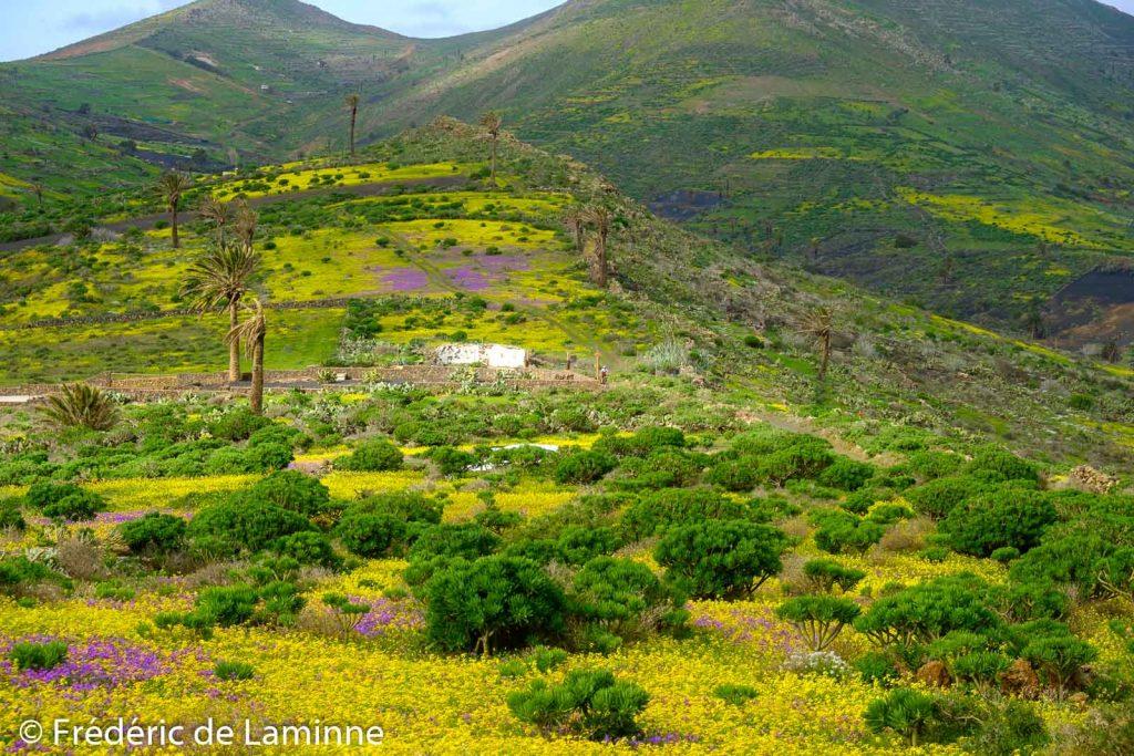 Que de couleurs entre Maguez et Haria