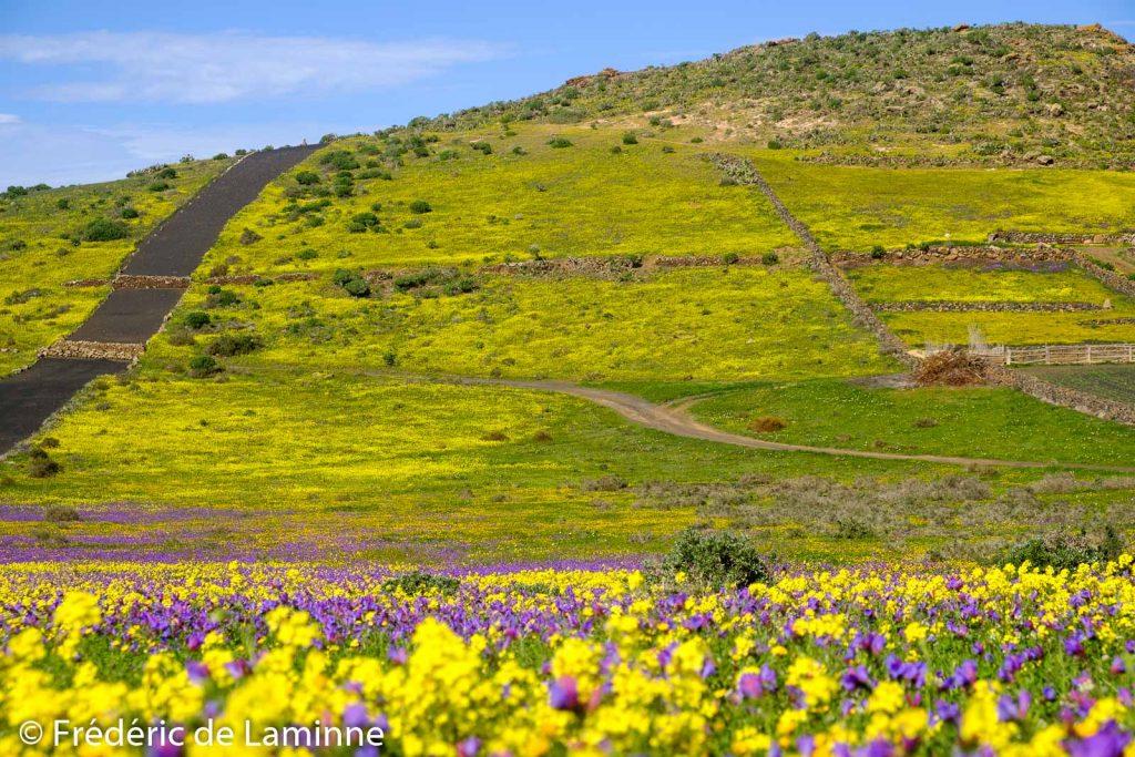 Un tapis de fleurs colorées parsème les environs de la ville d'Haria