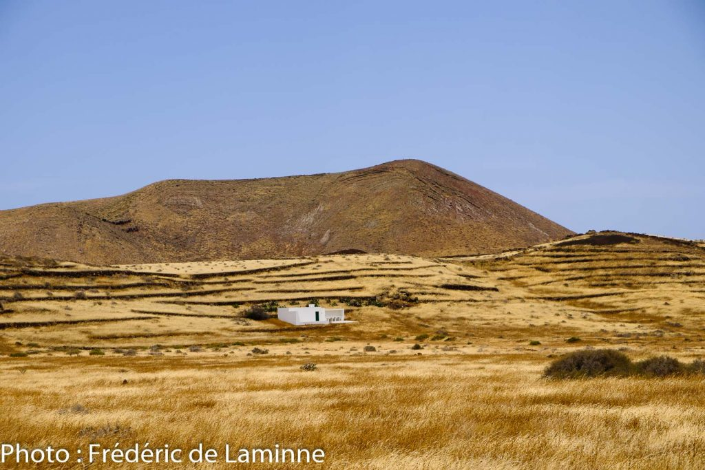 Herbes sèches entre Guatiza et El Mojon. Lanzarote.